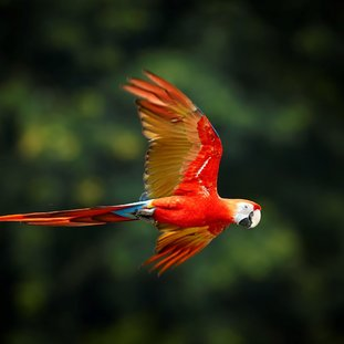 birdEcuador.jpg