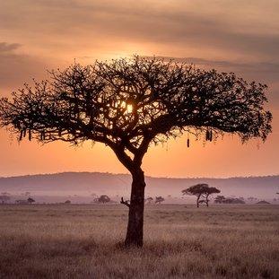 SerengetiNP.jpg