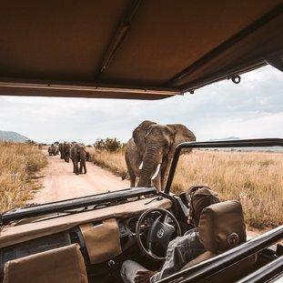 SafariZuid-Afrika.jpg