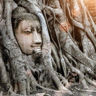 ayutthayathailandbuddha.jpg