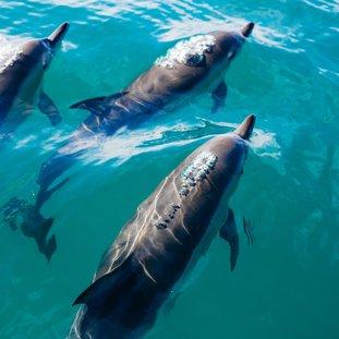 dolfijnen-pablo-heimplatz-qd34tnt_qdi-unsplashlarge.jpg