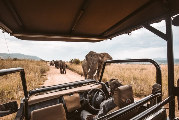 SafariAfrika1.jpg