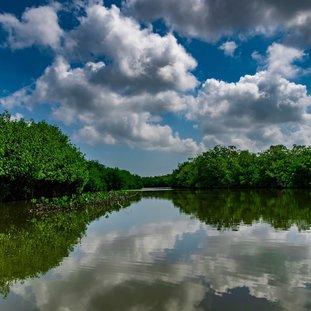 Mangroven.jpg